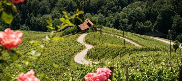 Famous Heart shaped wine road in Slovenia in summer, Heart form - Herzerl Strasse, vineyards in summer, Spicnik