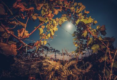 Beautiiful vineyard landscape in the moonlight. Night time. Autumn time, ready for harvest and production of wine